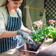 Woman putting flowers into the pot on balcony - PhotoDune Item for Sale