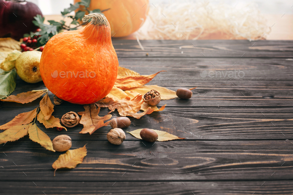 Beautiful pumpkin in light with bright autumn leaves, acorns, nuts, berries on wooden rustic table - Stock Photo - Images