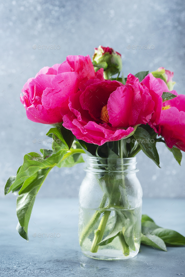 Peony Madame Butterfly - Stock Photo - Images