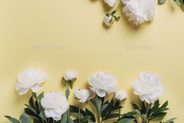 White elegant peony on the yellow background - Stock Photo - Images