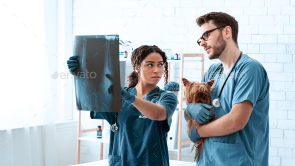 Radiography in veterinary practice. Vet doctors with xray and cute dog in animal clinic, copy space - Stock Photo - Images