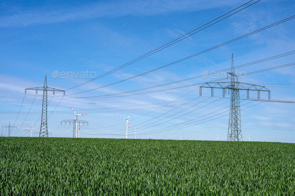 Overhead power lines in a cornfield - Stock Photo - Images