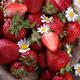 Strawberries fresh - PhotoDune Item for Sale