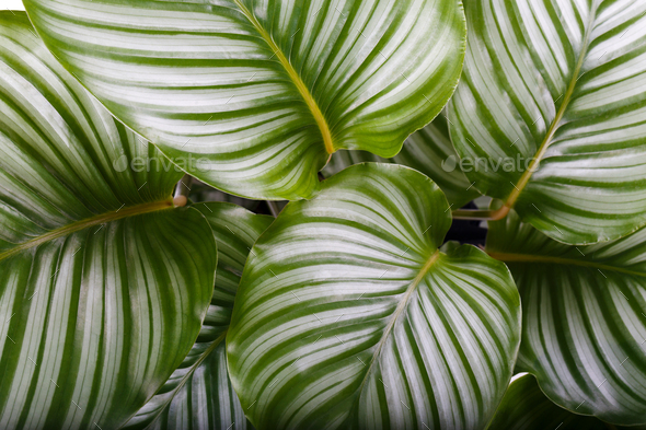 Tropical house plant - Stock Photo - Images