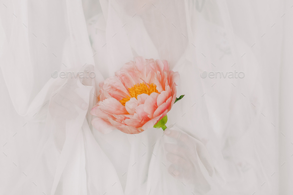Aesthetic sensual image of beautiful woman behind tulle holding pink peony - Stock Photo - Images