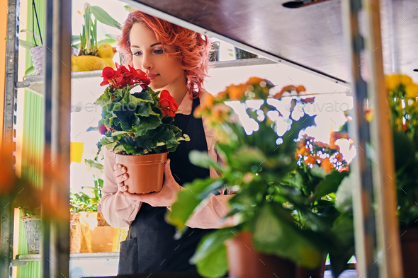 Redhead female holds flower - Stock Photo - Images