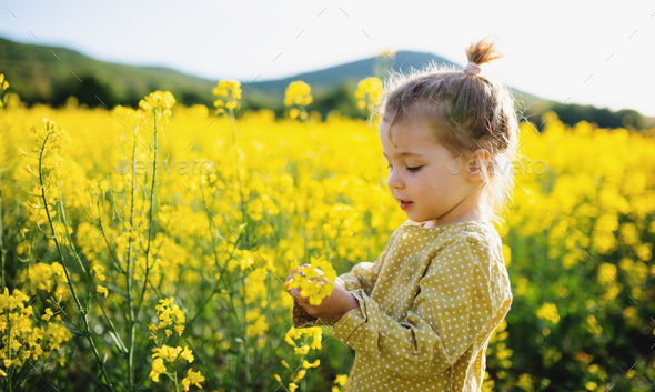 Side view of happy small toddler girl standing in nature in rapeseed field - Stock Photo - Images