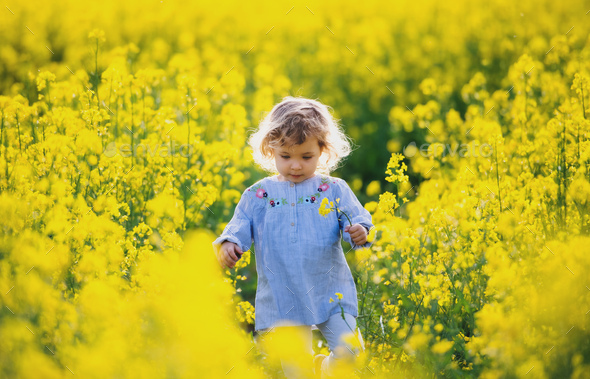 Front view of happy small toddler girl walking in nature in rapeseed field - Stock Photo - Images