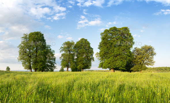 Summer meadow with beautiful trees and lush green grass - Stock Photo - Images