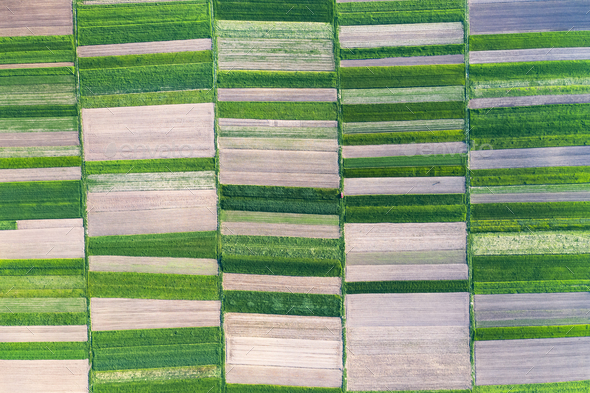 Aerial drone top view flight over green garden fields - Stock Photo - Images