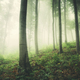 Green enchanted forest background - PhotoDune Item for Sale