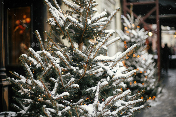 Christmas street decor. Stylish christmas trees with gold festive lights, covered with snow - Stock Photo - Images