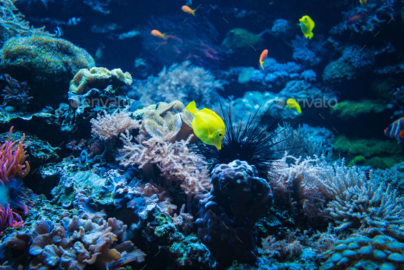 Coral reef and fish underwater photo. Underwater world scene. - Stock Photo - Images