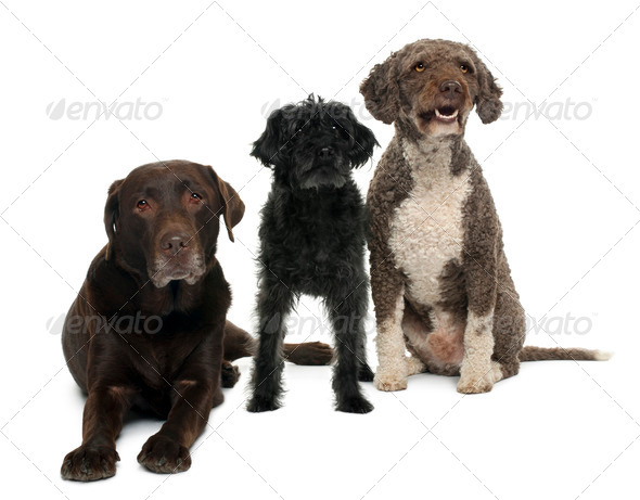 Group of dogs in front of white background - Stock Photo - Images