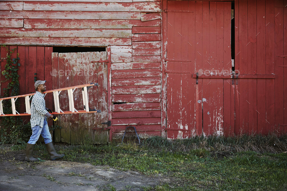 A young man in working clothes and cap carrying a ladder across a farm yard. - Stock Photo - Images