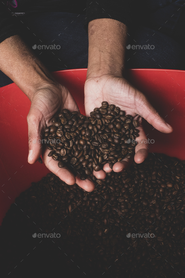 High angle close up of person holding freshly roasted coffee beans. - Stock Photo - Images