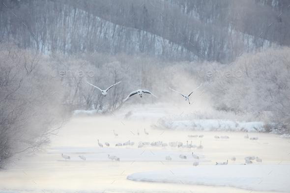 Flock of birds in woodland in winter. - Stock Photo - Images