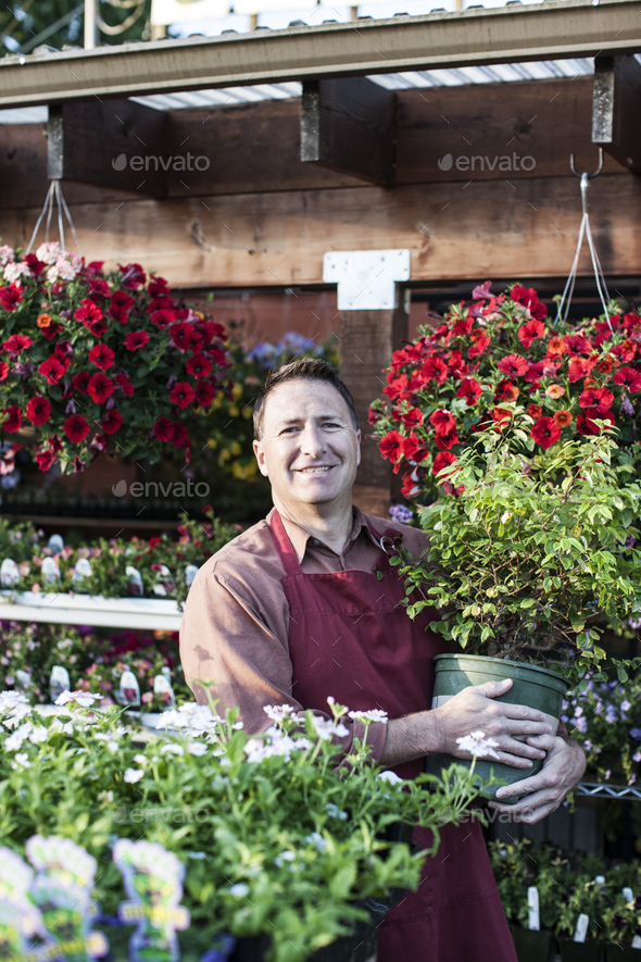 Caucasian man, a nursery owner standing holding a large plant in a pot, by displays of flowering - Stock Photo - Images