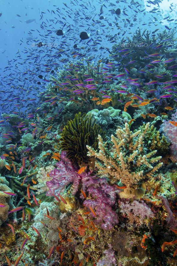 Coral reef with growing soft corals underwater, in vivid colours. - Stock Photo - Images