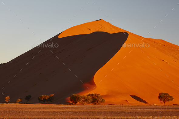 Sand dune shifting in the wind with trees at its base. - Stock Photo - Images