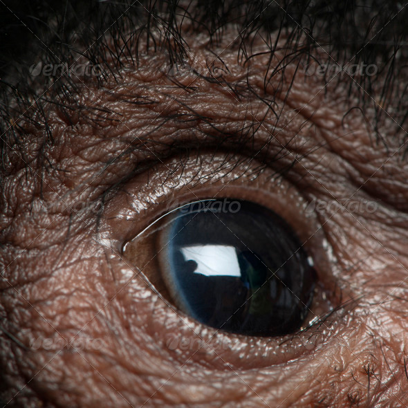 Close-up of Red-faced Spider Monkey eye, Ateles paniscus, 3 months old - Stock Photo - Images