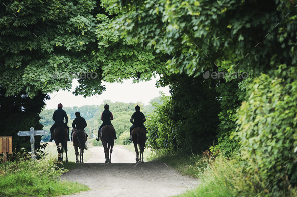 Rear view of a four riders on brown horses riding along a path. - Stock Photo - Images
