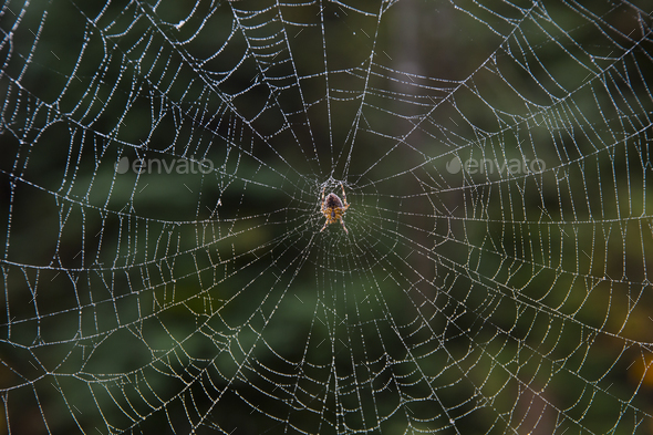 Close up of spider in a web. - Stock Photo - Images