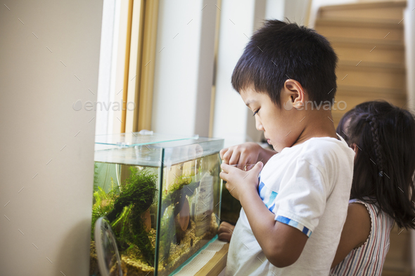 Family home. A boy feeding the fish in a tropical fish tank on a windowsill. - Stock Photo - Images