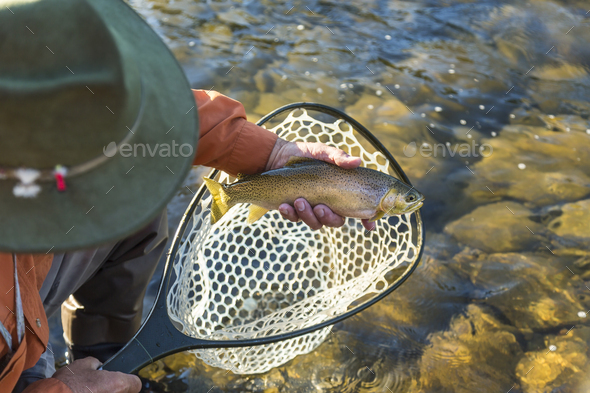 High angle view of fisherman taking freshly caught trout out of fishing net. - Stock Photo - Images