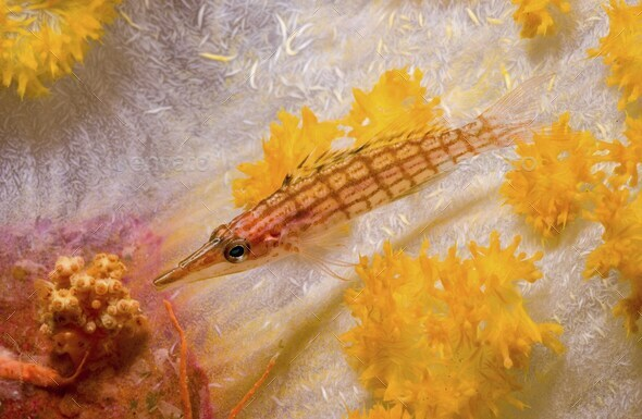 A Longnose Hawkfish, Oxycirrhites types, rests on a stalk of soft coral, Papua New Guinea - Stock Photo - Images