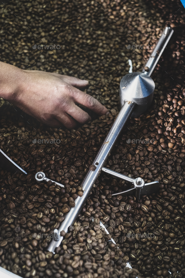 High angle close up of person checking freshly roasted coffee beans in coffee roaster. - Stock Photo - Images