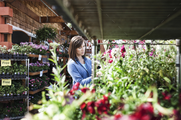 Caucasian woman checking on plants in a garden center nursery. - Stock Photo - Images