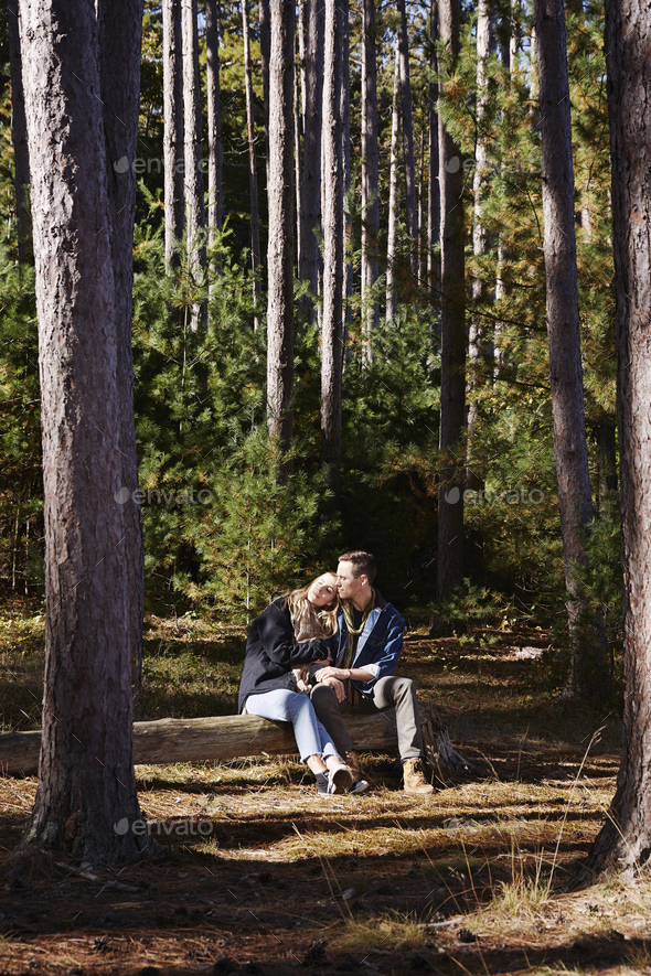 A couple seated ona log in a pine forest. - Stock Photo - Images