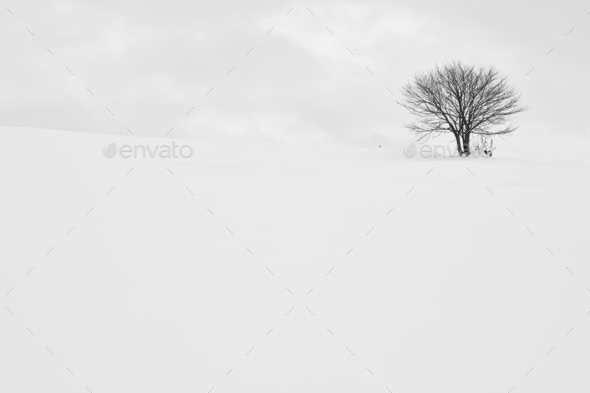 Snow-covered winter landscape with solitary tree in the distance, Biei. - Stock Photo - Images