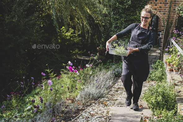 Smiling blond woman wearing glasses and apron walking along garden path, carrying tray with fresh - Stock Photo - Images