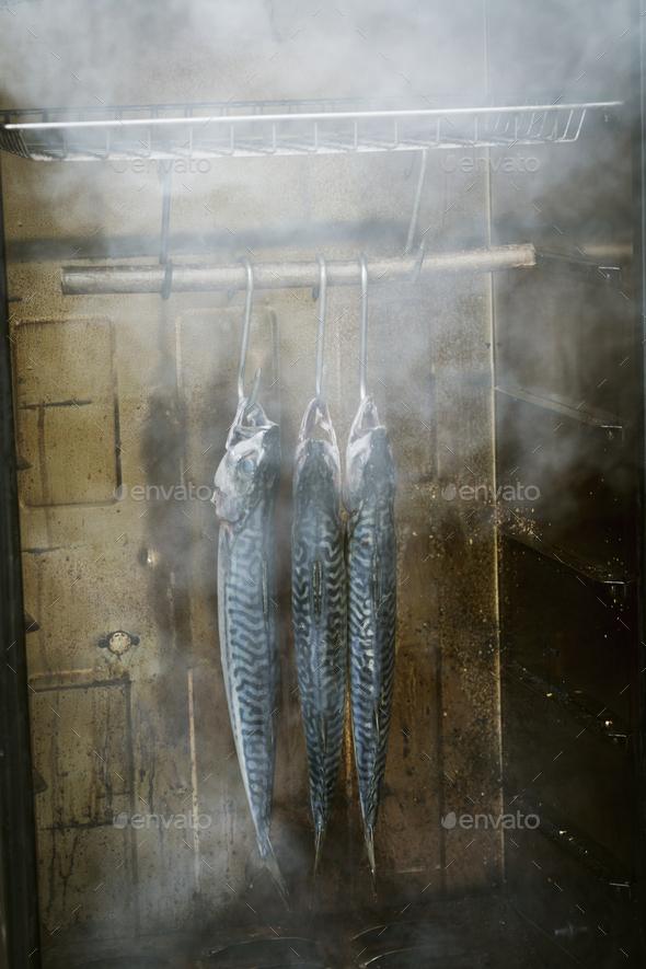 Three mackerel hanging in a fish smoker. - Stock Photo - Images