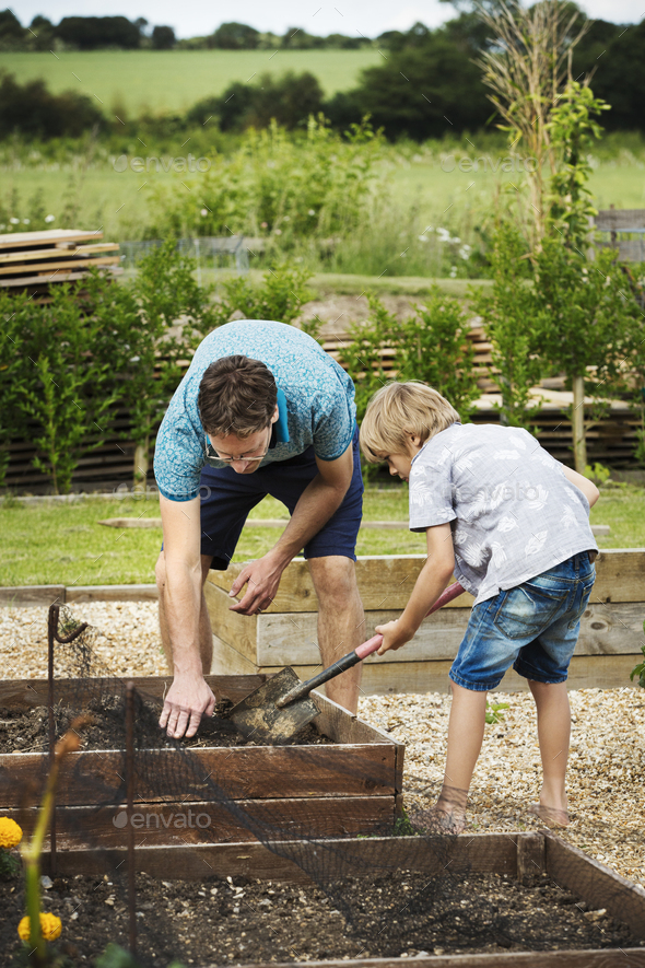 Man and boy standing at a plant bed in a garden, boy holding a spade. - Stock Photo - Images