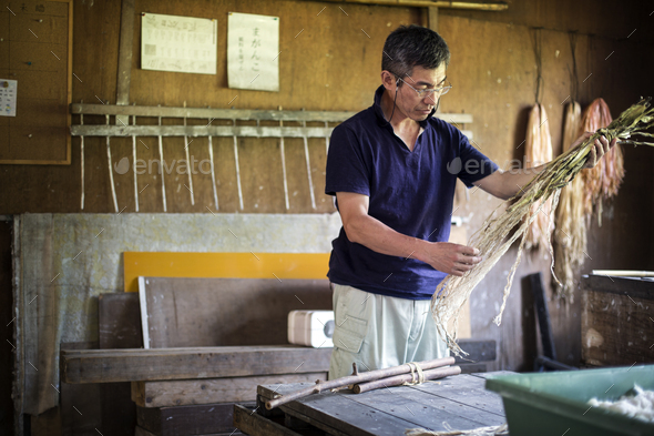 Japanese man in a workshop holding plant twigs and stripping the fibre to making traditional Washi - Stock Photo - Images