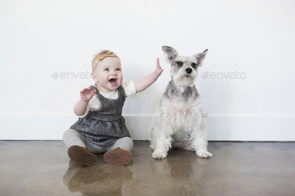 A young girl and a small dog sitting side by side on the floor. - Stock Photo - Images