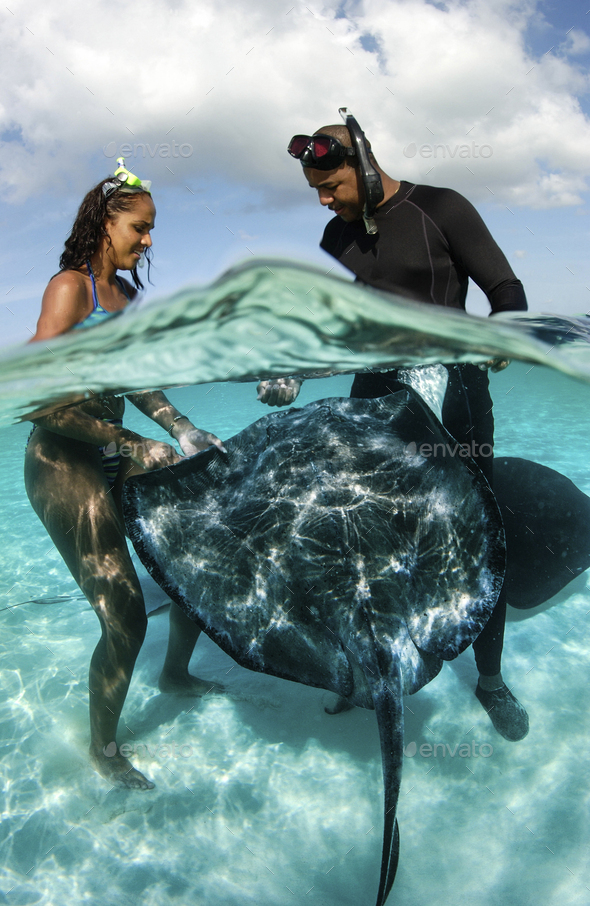 Miss Cayman islands, 2002, interacts with Southern stingrays at the popular tourist site, Stingray - Stock Photo - Images