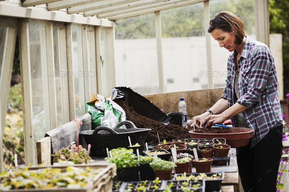 Woman standing in a greenhouse at a bench with flower pots, wearing checkered shirt, planting. - Stock Photo - Images