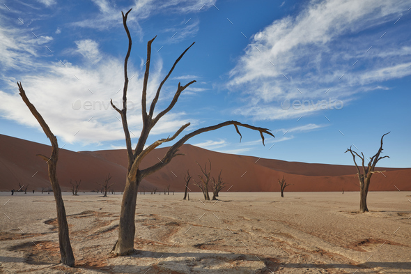 Bare trees standing in front of a sand dune. - Stock Photo - Images