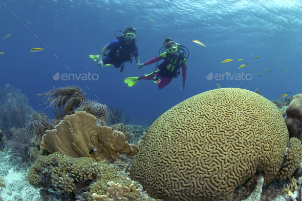 Pair of Scuba divers on a shallow reef in Klein Bonaire. - Stock Photo - Images