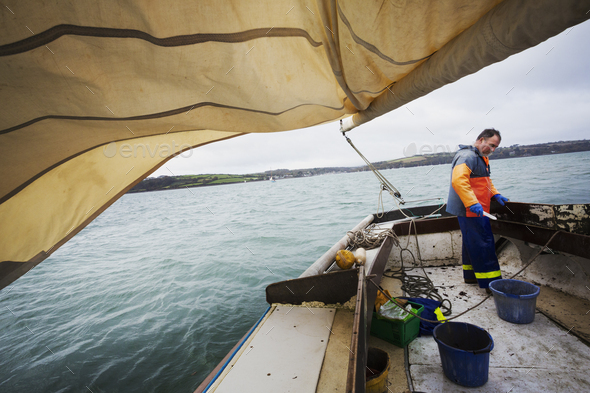 Traditional Sustainable Oyster Fishing. A fisherman on a sailing boat - Stock Photo - Images