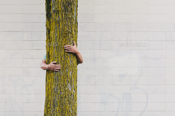 A man hugging a tree on an urban street in Seattle. - Stock Photo - Images