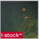 Fish In the Pond - VideoHive Item for Sale