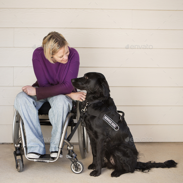 A mature woman wheelchair user stroking her black labrador service dog and making eye contact with - Stock Photo - Images