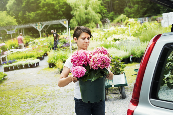 Car parked at a garden centre, a woman loading flowers into the boot. - Stock Photo - Images