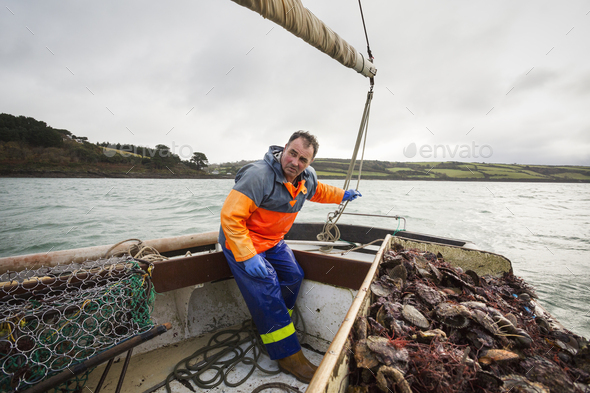 Traditional sustainable oyster fishing. A fisherman on a sailing boat sorting the oyster catch - Stock Photo - Images