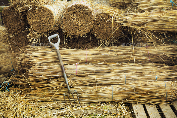 Pitchfork leaning against bundles of straw used for thatching a roof. - Stock Photo - Images